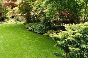 Fertilize, Feed or Treat a Lawn