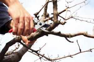 Treat, Protect and Maintain Trees & Shrubs