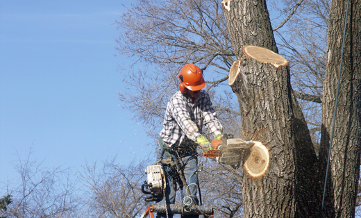 Apex Tree Service, Inc.