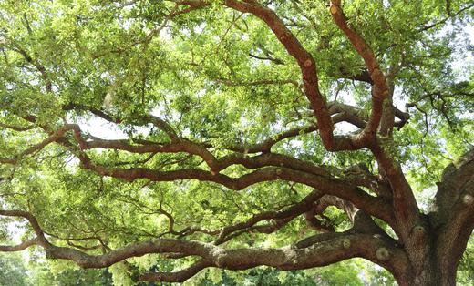 Herbst Tree Service