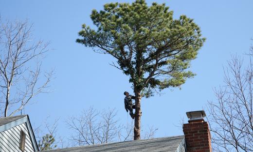 AAA Advanced Tree Experts