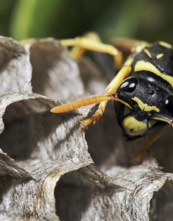Triple L Pest Control