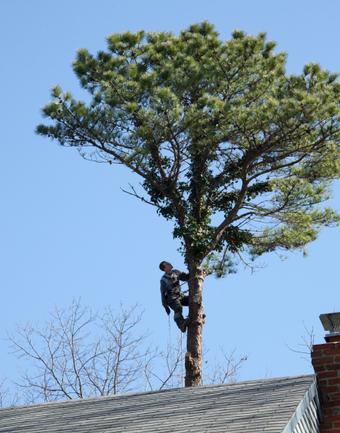 Tree Master Tree Service